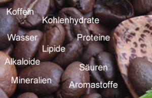 Die Inhaltsstoffe und seine Wirkung im Kaffee