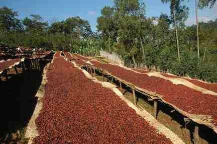 Kaffee Yirgacheffe Special