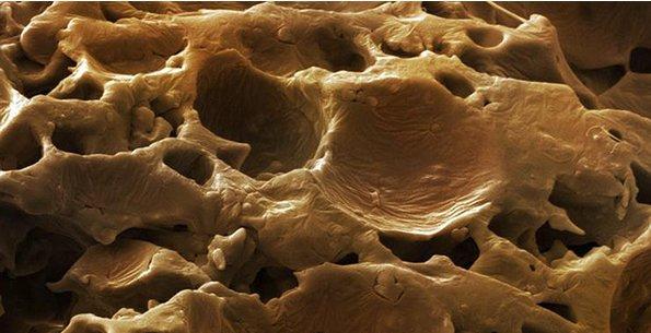 Instant Kaffee untern Mikroskop