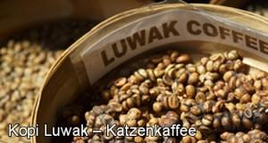 Kopi Luwak – Katzenkaffee