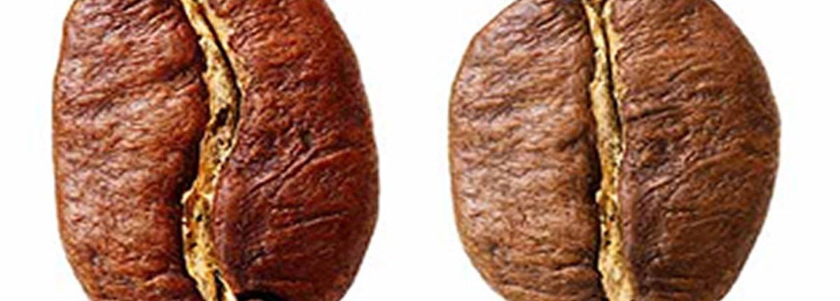 Was ist eigentlich der Unterschied zwischen Arabica- und Robusta-Kaffeebohnen?