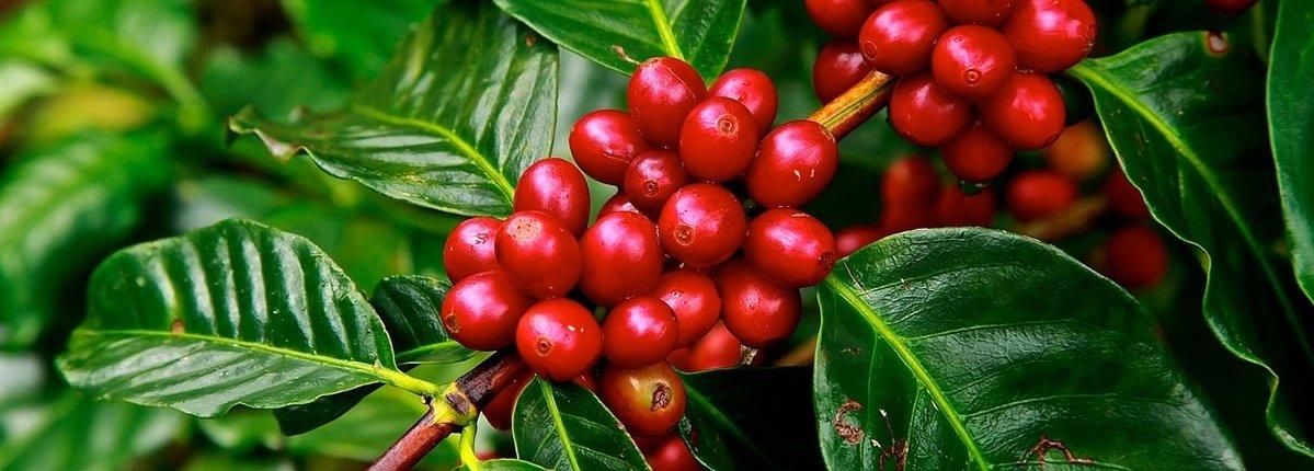 Kaffeeraritäten